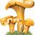 Contrôle des champignons
