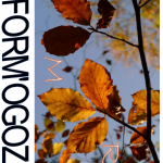 Inform'Ogoz - Novembre 2015